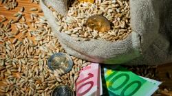 En sæk med korn og euro.