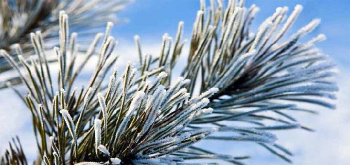 Forsidebillede vinterprognose 2017